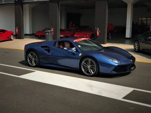blue 488 spider south africa